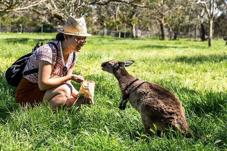 Adelaide Central YHA_Cleland Wildlife Park (64).jpg