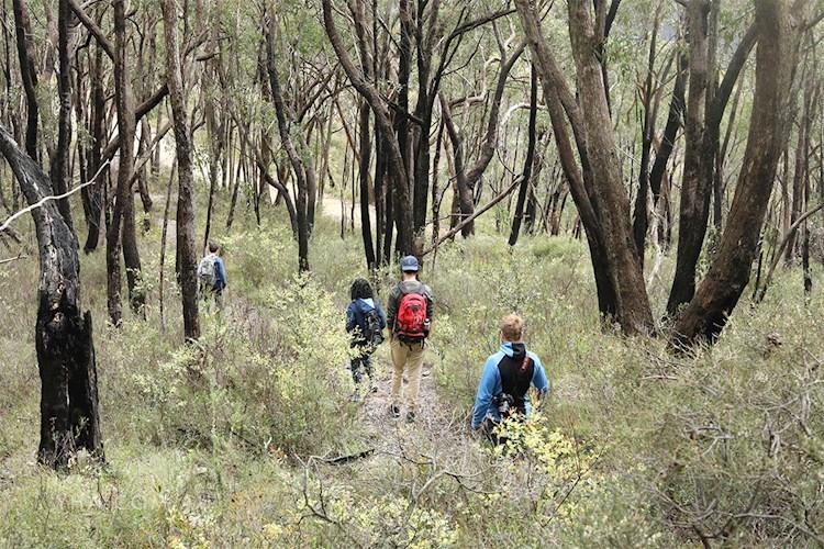 Mt Lofty YHA _bush walk_family_2018 (17).jpg