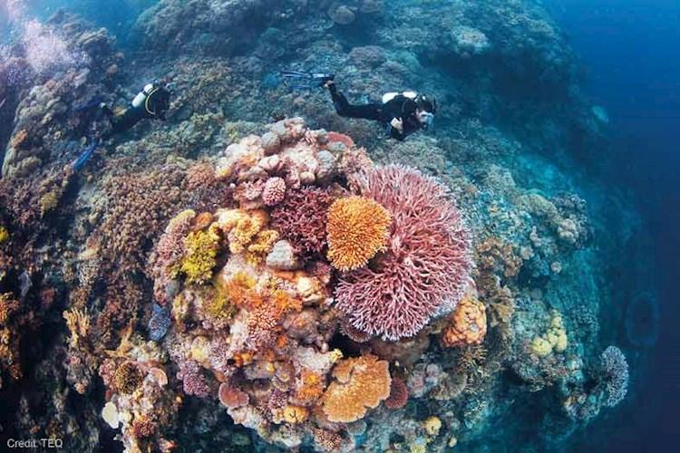 Great-Barrier-Reef-5-Day-Scuba-Diving-Course-Ribbon-Reef.jpg