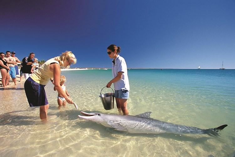 Monkey Mia Dolphin Feeding_credit Tourism WA.jpg