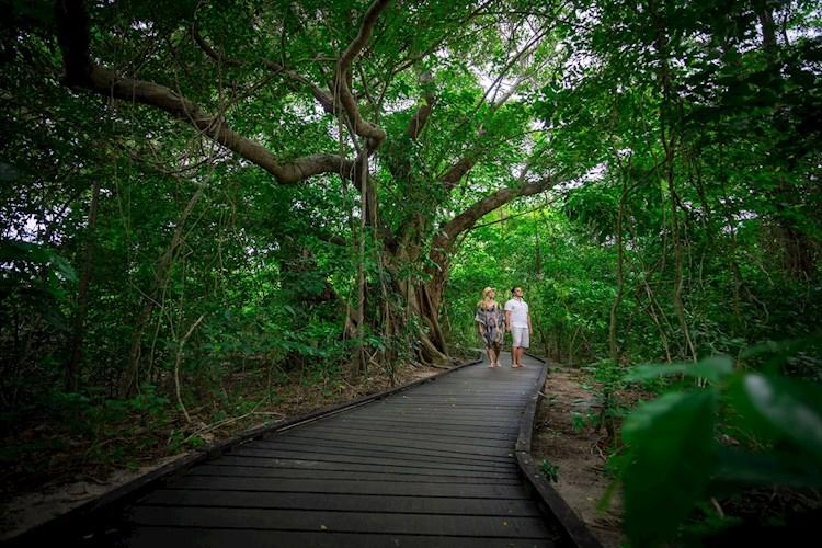 green_island_rainforest_walk - Copy.jpg