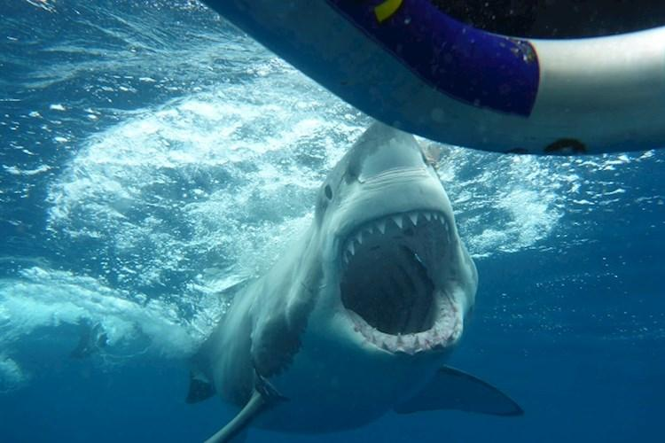 Shark Cage Dive Special - Jaws.jpg