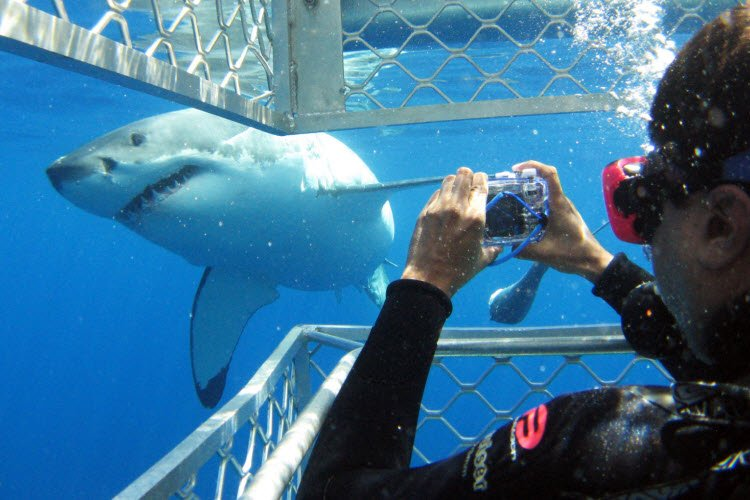 5. Port Lincoln_Shark Cage_SATC (2)