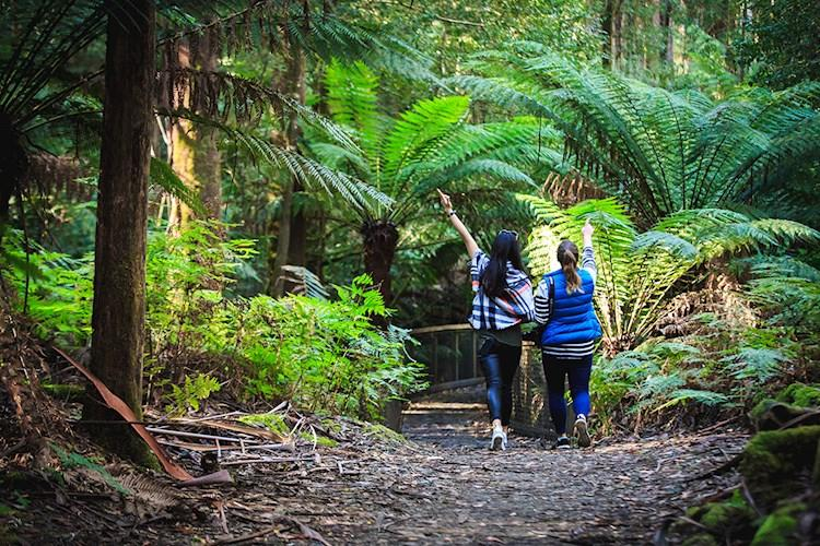 Visit Incredible Mt Field National Park