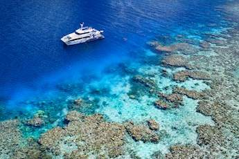 1 Day Great Barrier Reef Tour from Port Douglas tile image
