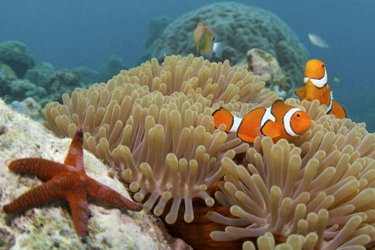 Great Barrier Reef Snorkelling Adventure- Clown fish on coral.jpg
