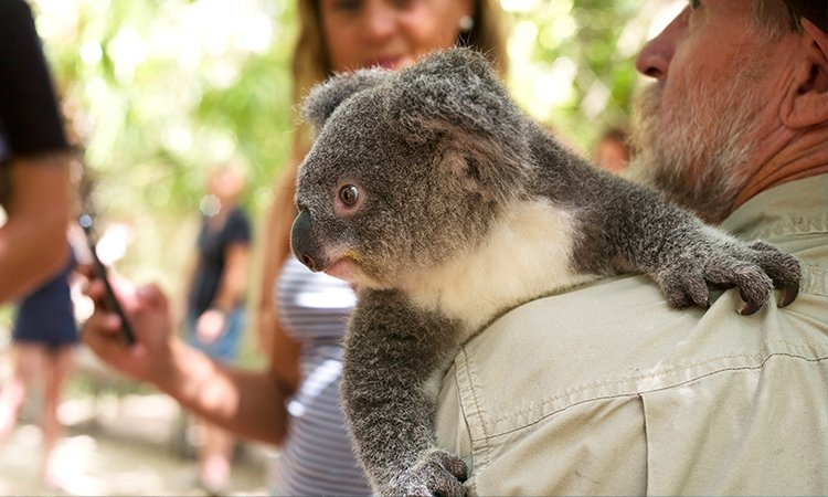 Get close to a Koala at Magnetic Island YHA