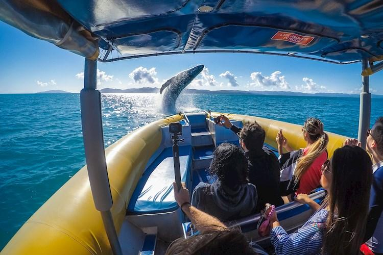 1 Day Whitsundays Tour- Whales in winter
