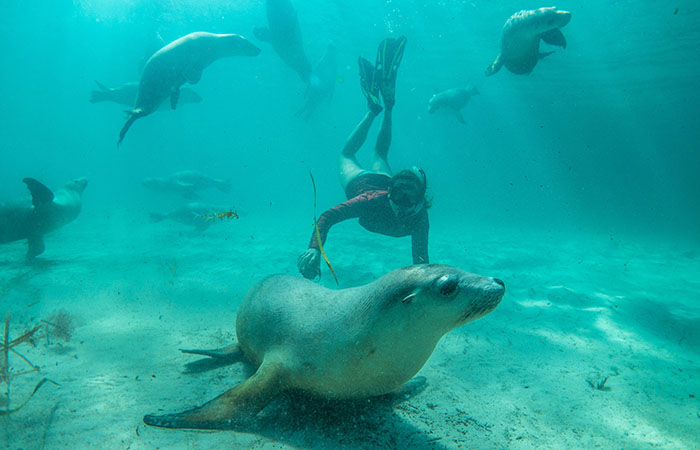 swim with sea Lions - Greg Snell TA