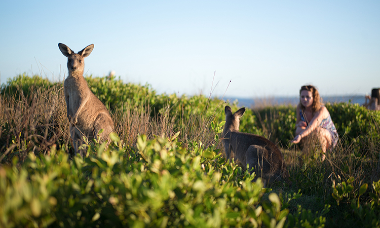 Kangaroos at Moonee Beach - Hidden NSW Beaches
