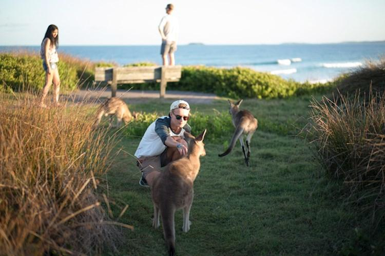 Coffs Harbour_Kangaroos_6.jpg
