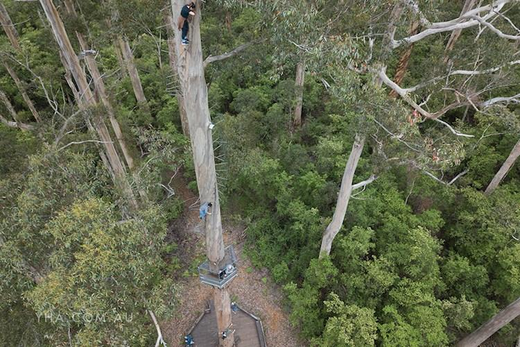 Pemberton YHA_Dave Evans Bicentennial Tree_2018 (5).jpg