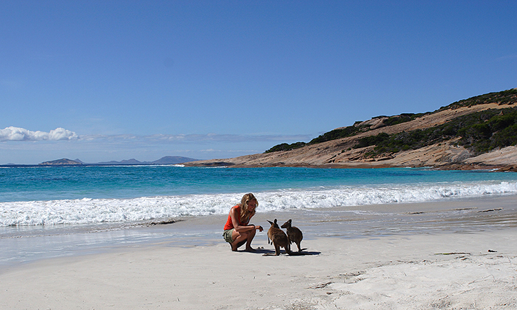 Kangaroos on beach at Lucky Bay, near Esperance YHA