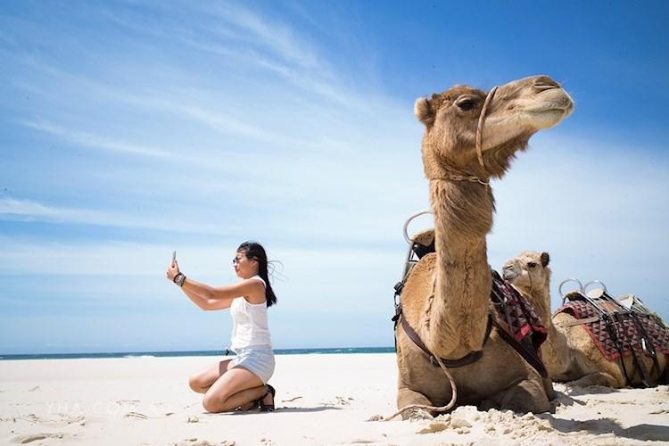 Port Macquarie YHA - Camel Riding