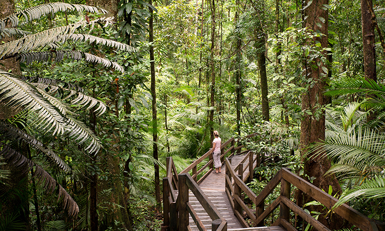 Explore the Daintree in Cairns