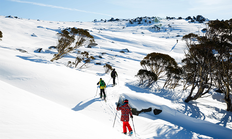 Backcountry Tours Image Credit Thredbo Resort
