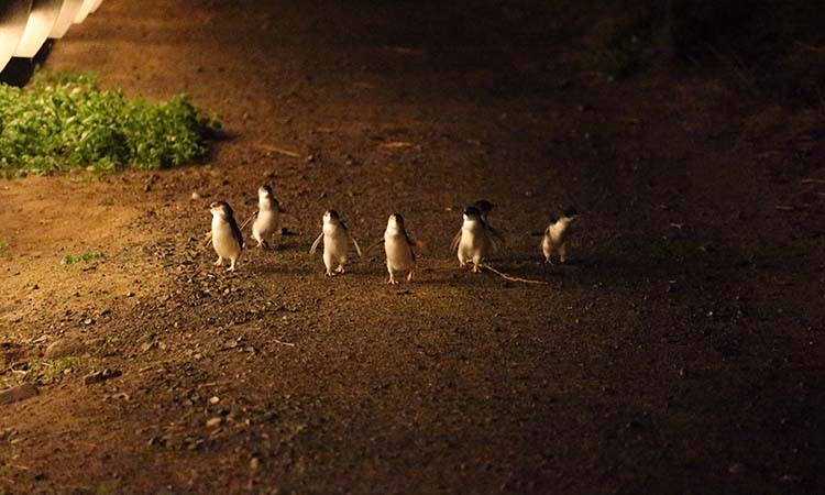 Penguins (1).jpg