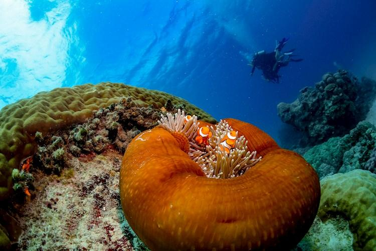 1 Day Scenic Flight and Great Barrier Reef Tour- Find Nemo