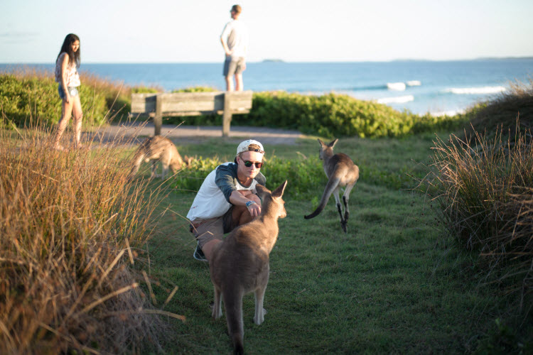 These kangaroos heading to the beach