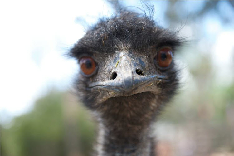 This emu who's wondering what you're looking at