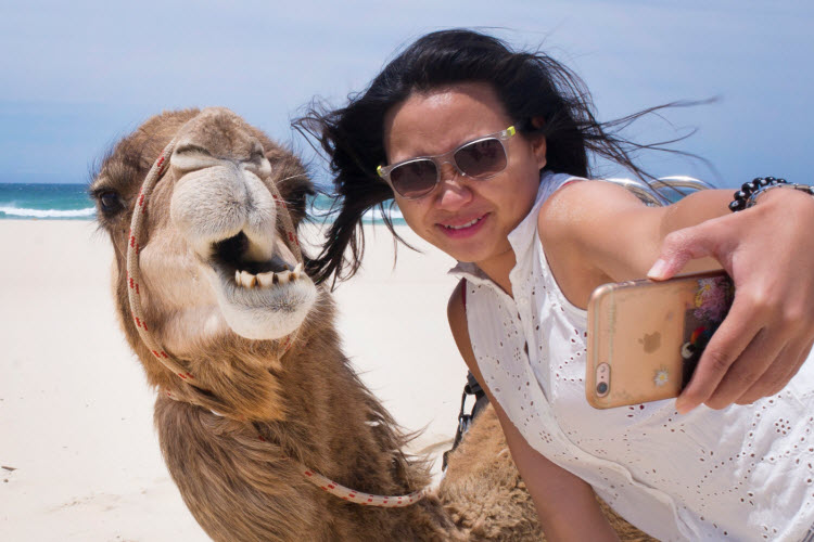 This camel's epic photobomb