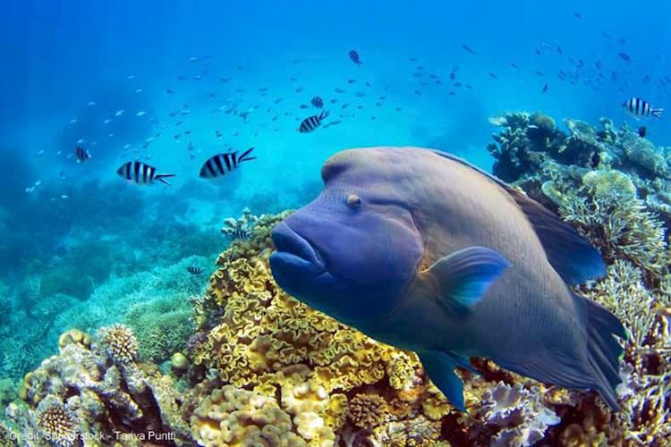 Great-Barrier-Reef-Snorkelling-Coral-Fish.jpg