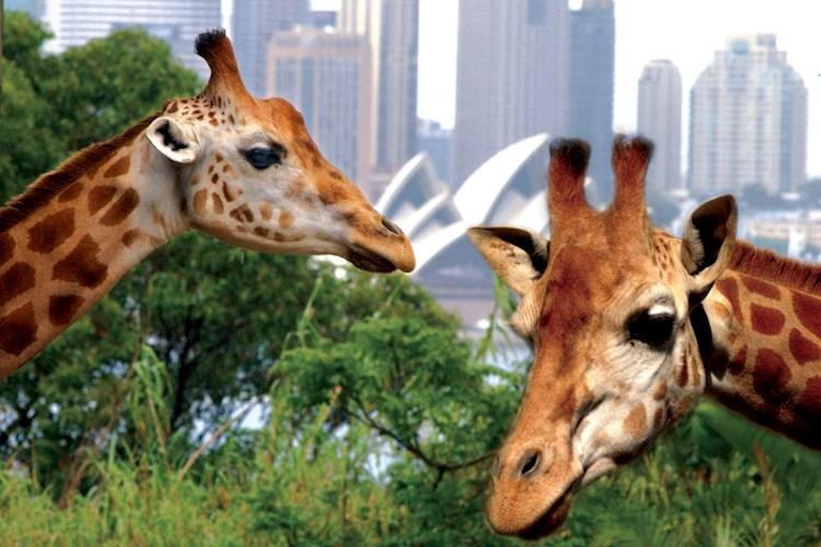 Taronga Zoo by Captain Cook Cruises(1).jpg