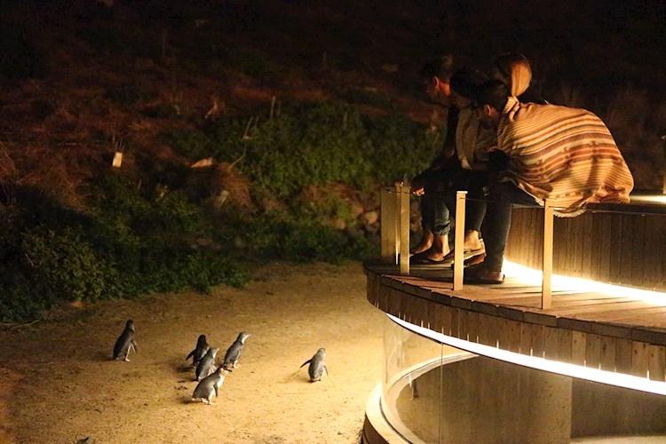 Penguin Parade_YHA (11) 1125x750.jpg