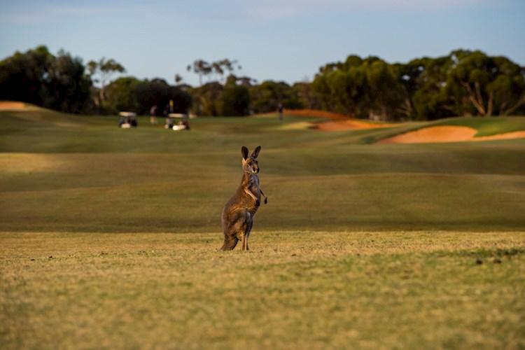 Kalgoorlie Kangaroo Golf Court - Credit Abby Murray Photography