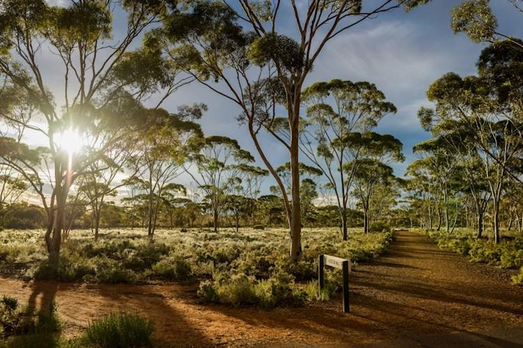 Kalgoorlie Nature Credit Abby Murray Photography